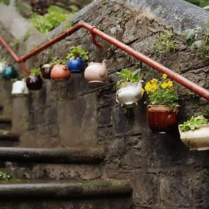 Potted Teapots And Jugs