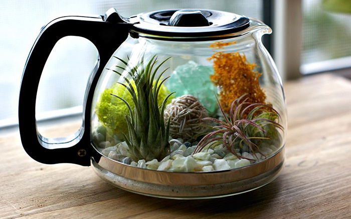 Coffee Pot Terrarium