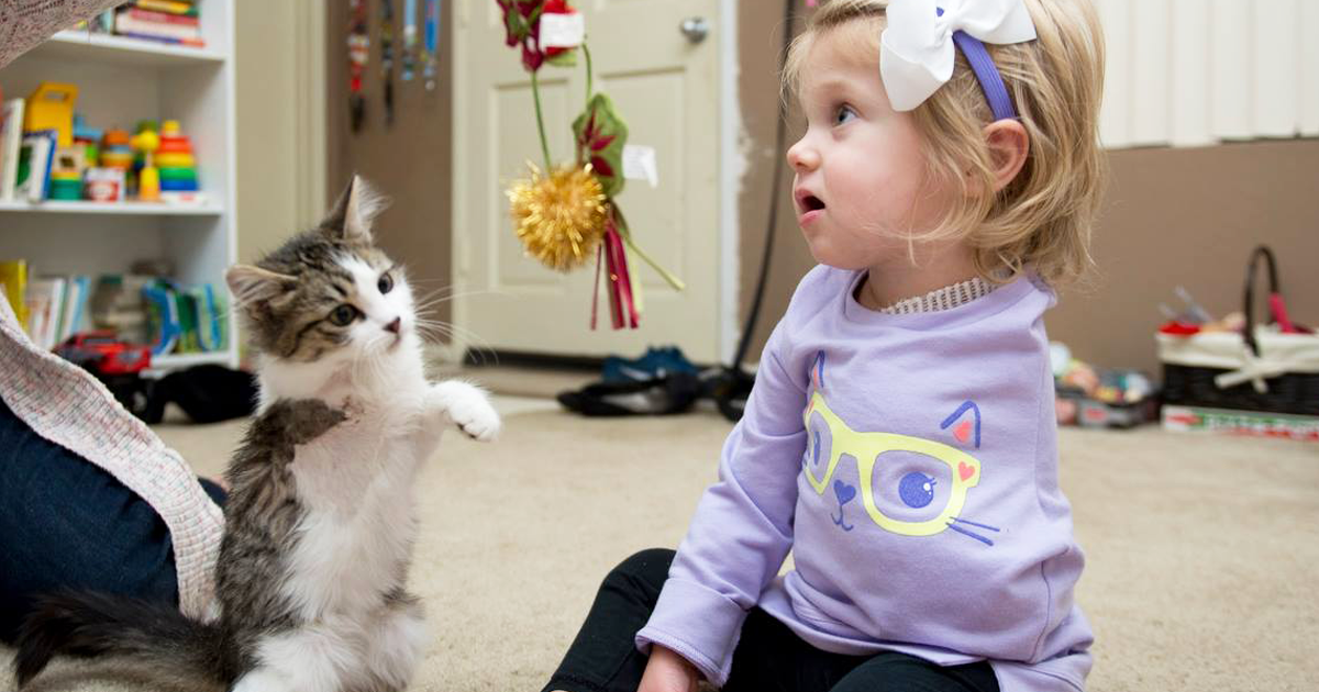 3-Legged Kitten Adopted By Amputee Girl Becomes Her Best Friend