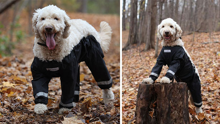 Riddle Finally Solved: Dogs Should Wear Pants Like This!