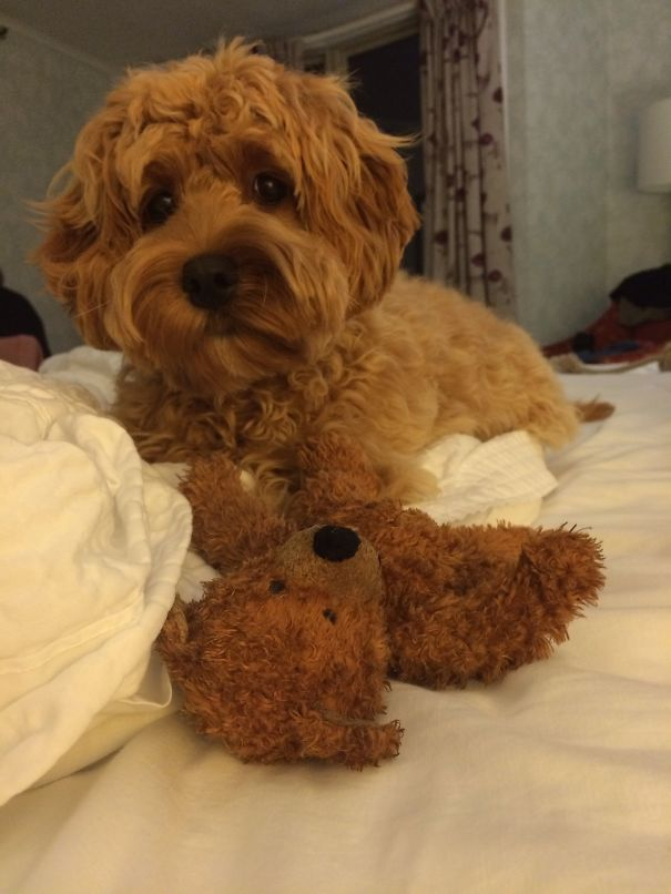 Which One Is The Teddy Bear?