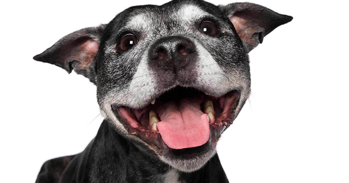 Happy Dog Bored Panda - Meet gluta the smiling dog that beat cancer
