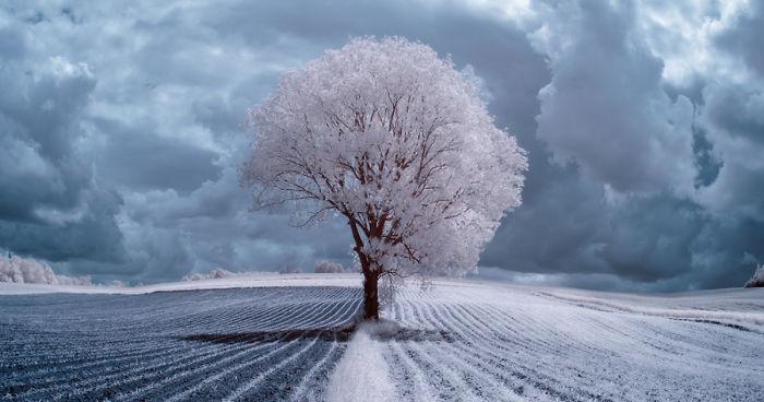 poland trees beauty infrared nature majestic tree submission user boredpanda