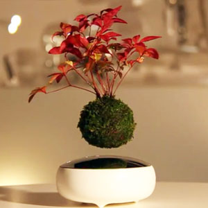 Floating Bonsai Trees Are Now A Reality