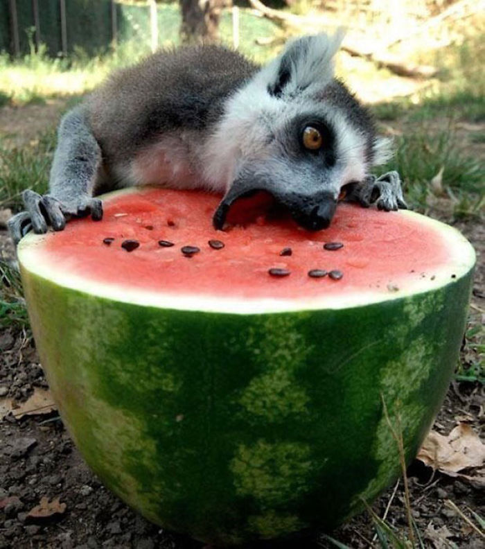 [Image: funny-animals-eating-111__700.jpg]