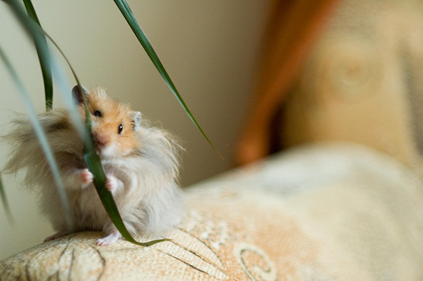 Hamster Eating A Plant