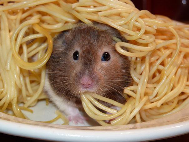 Spaghetti Rat