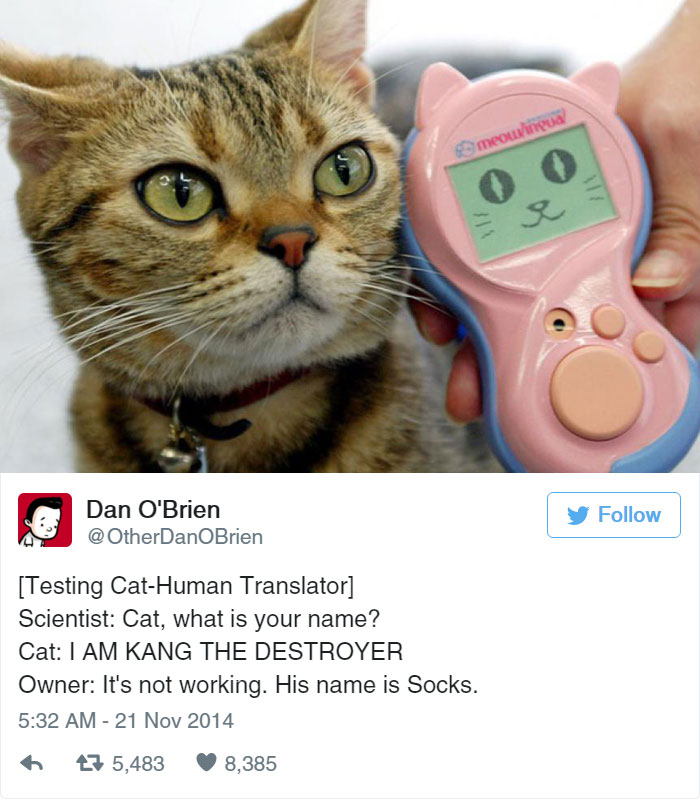 Funny Tweets About Cats Bored Panda - 8 cat puns that will put a smile on your face