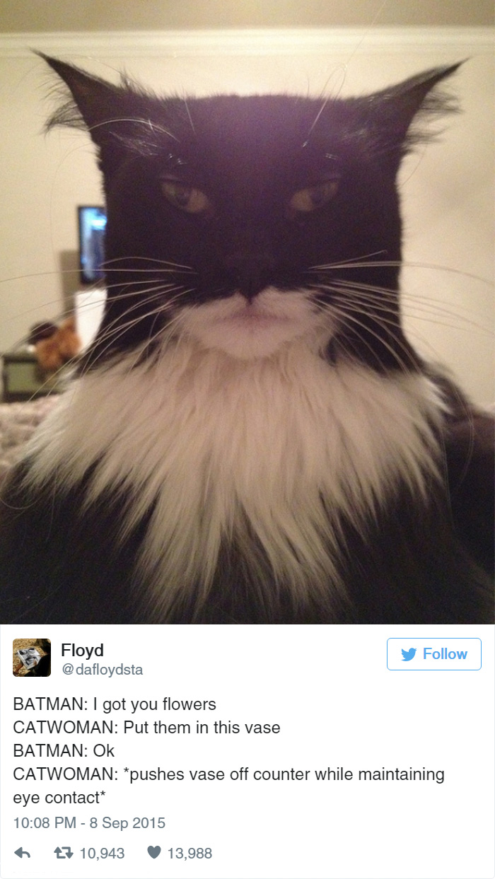 15+ Funny Tweets About Cats | Bored Panda Funny