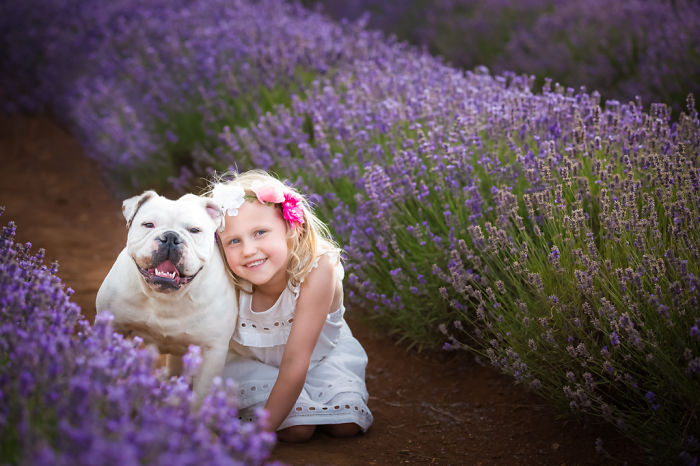 Fur Babies & Friends Heads To Bridestowe Lavender Estate In Tasmania