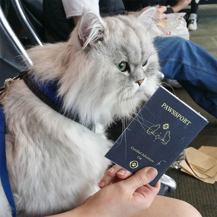 gandalf-cat-travelling-the-world-21