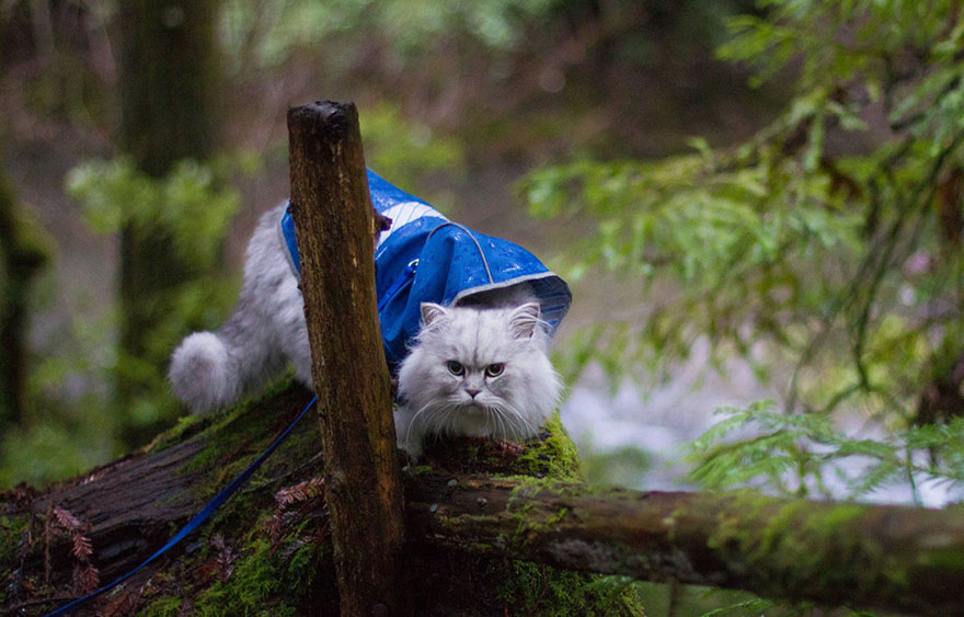 gandalf-cat-travelling-the-world-5