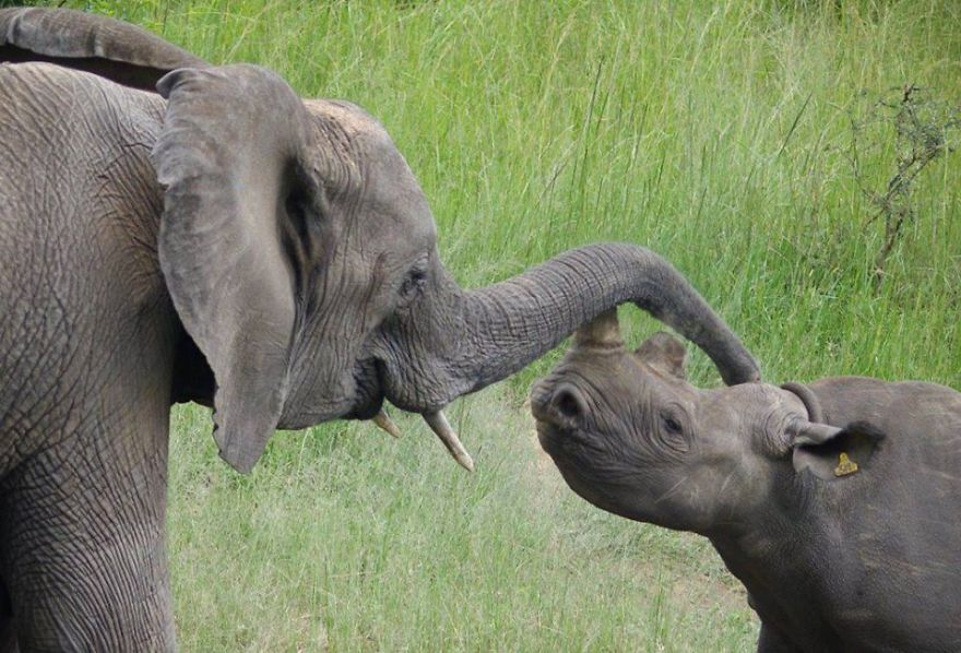 New Law That Makes Elephants And Rhinos Safer And Secure.