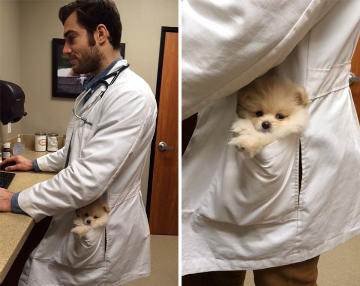 Hottest Veterinarian