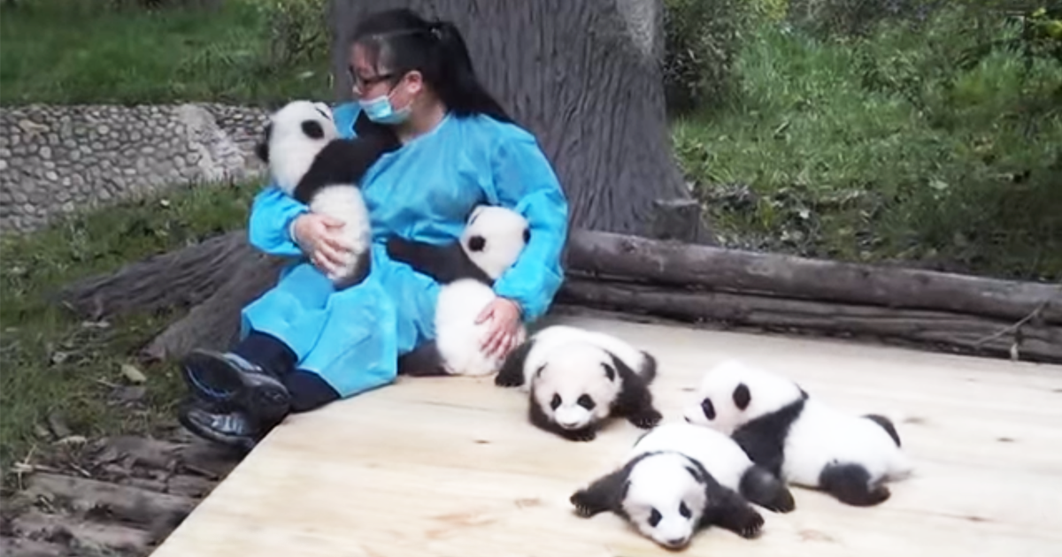 The World's Best Job: This Woman Hugs Pandas And Is Paid ...