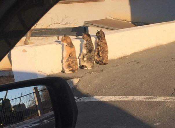 human-cat-standing-on-two-legs-synchronized-reaction-1
