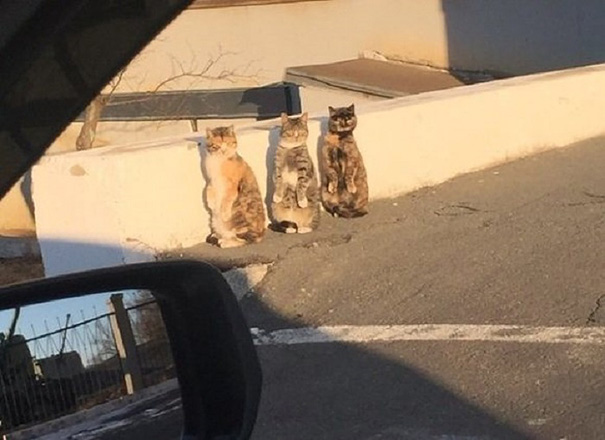 human-cat-standing-on-two-legs-synchronized-reaction-2