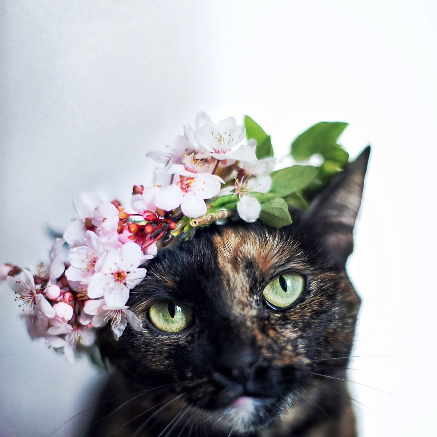 I Photographed My Cat Throughout The Seasons