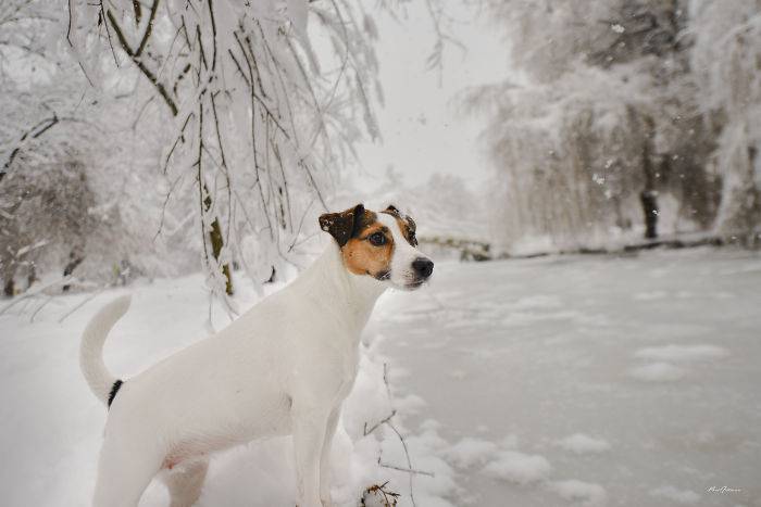 I Photographed My Dog Enjoying A Snowy Day