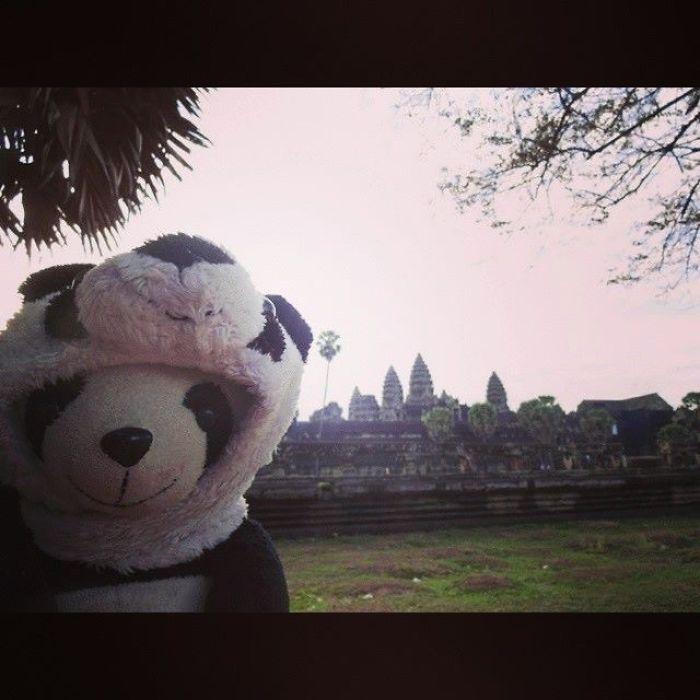 I Travel The World With My Panda Bear