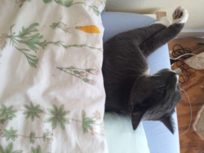 Moss Needs His Blanket!