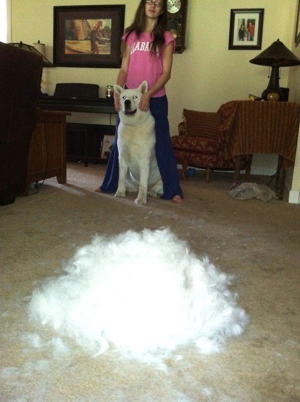 Sweet Maya And Her Pile-o-fur.