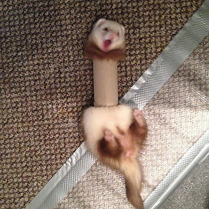 The hungry beagle