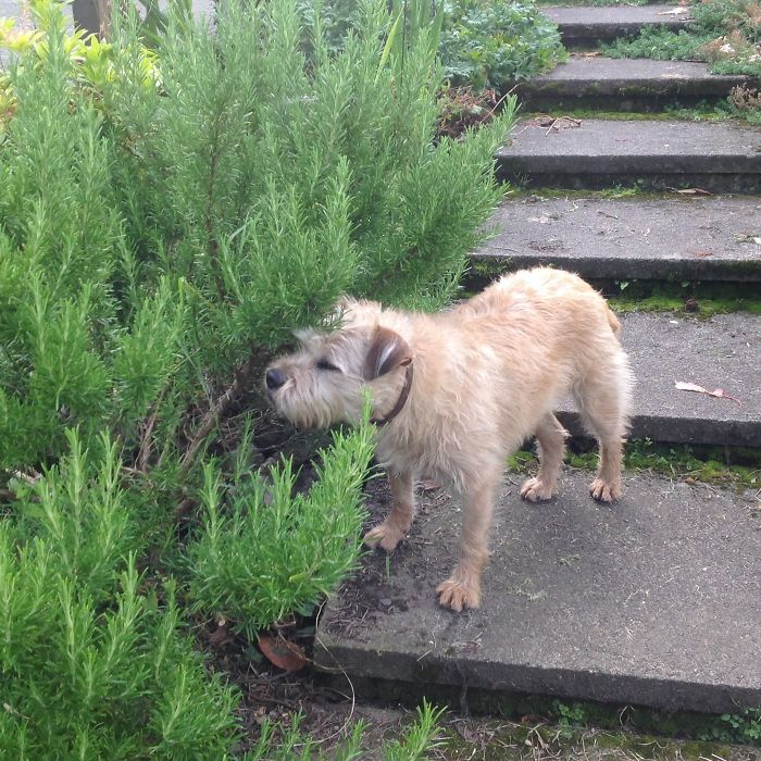 Nora Sniffing Rosemary