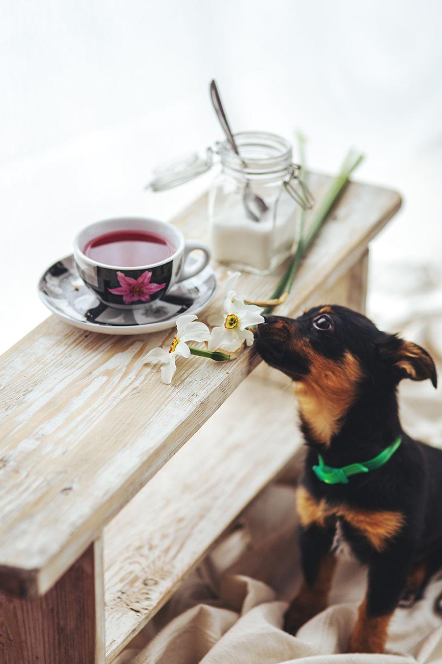 Little Puppy Smels A Flower