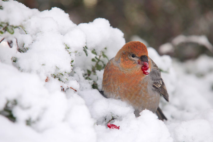 Karl Was Observing How Small And Cute Birds Were Trying To Survive Estonian Winter.