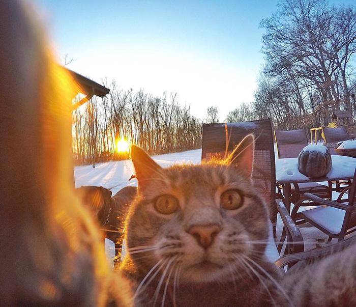pisica Manny iubeste să faca selfie-uri 4