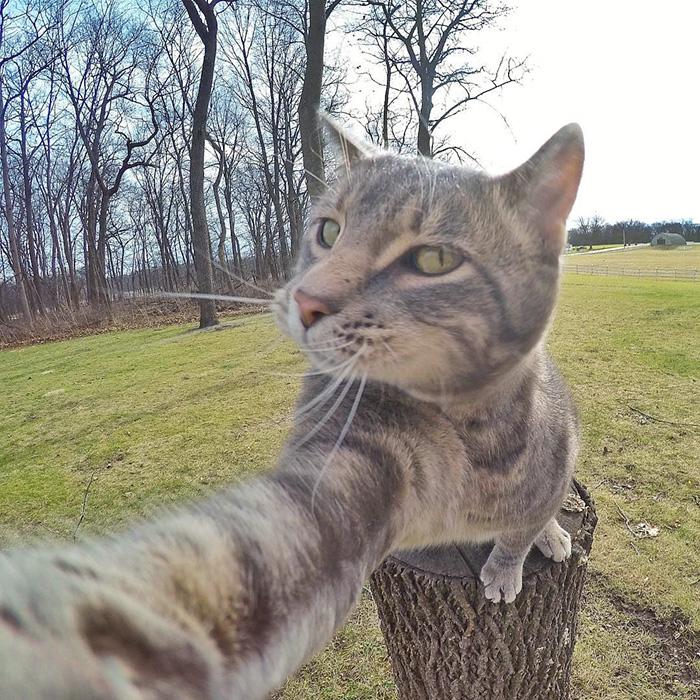 pisica Manny iubeste să faca selfie-uri 2
