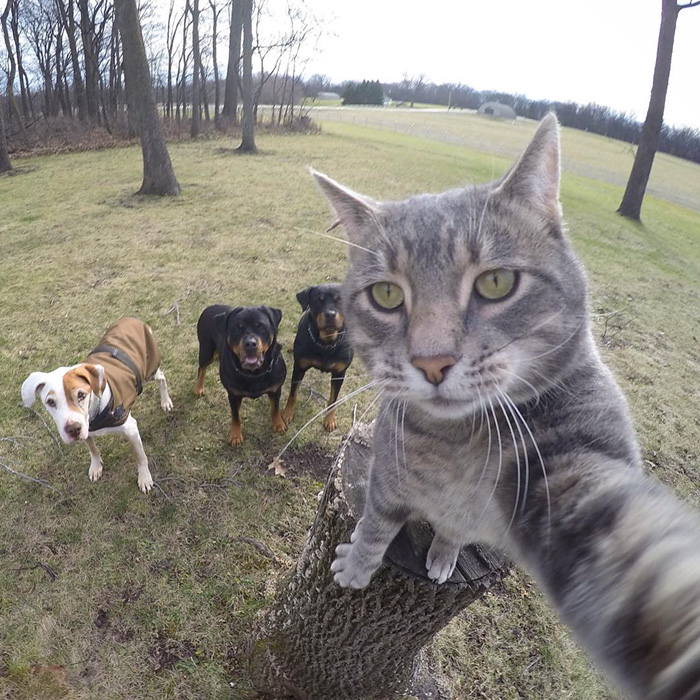 Image result for cat selfie
