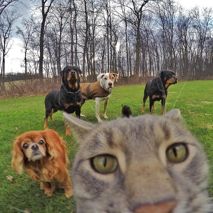pisica Manny iubeste să faca selfie-uri 5