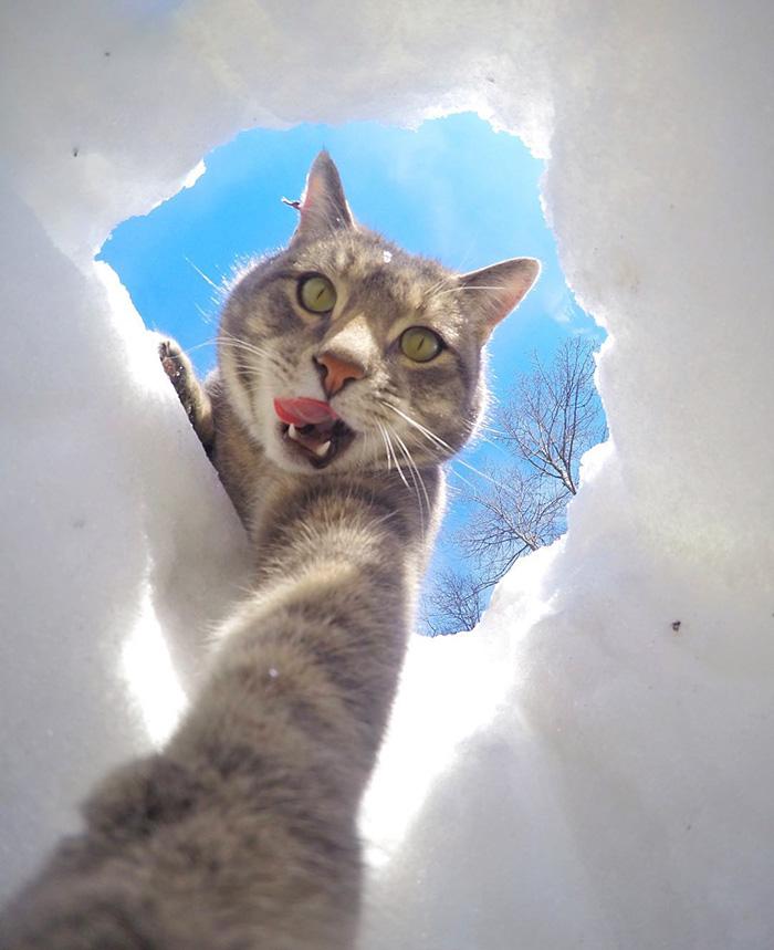 pisica Manny iubeste să faca selfie-uri 6