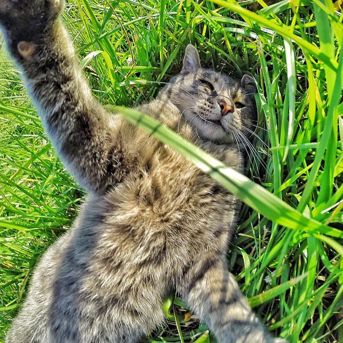 pisica Manny iubeste să faca selfie-uri 8