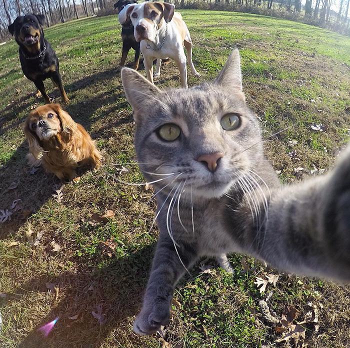 pisica Manny iubeste să faca selfie-uri