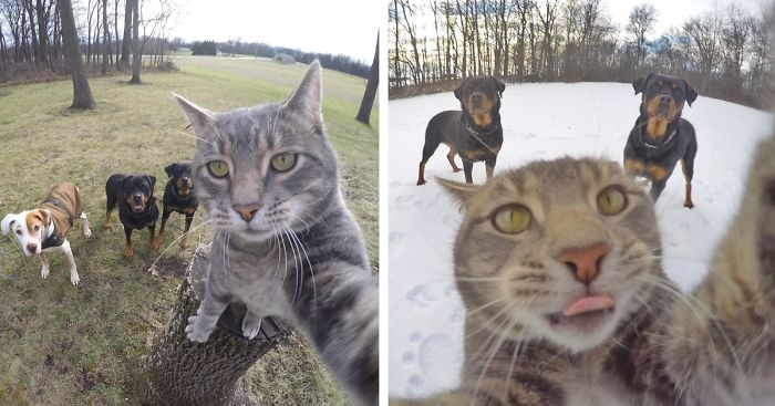 Photos Of Cat And Dog Together Or Fb Group