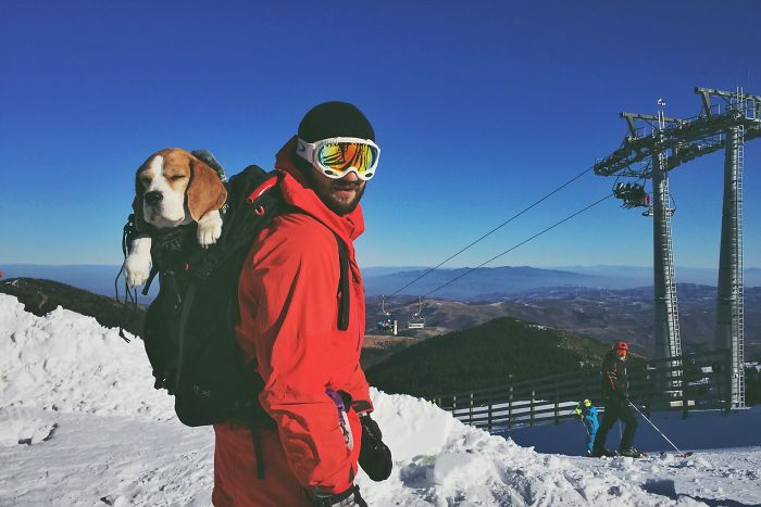 Meet Eli, Our Snowboarding Beagle
