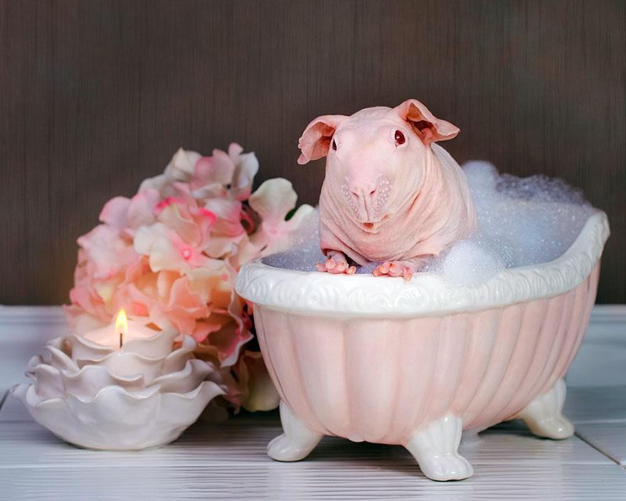 nude-guinea-pig-bath-time-erin-bonilla-3