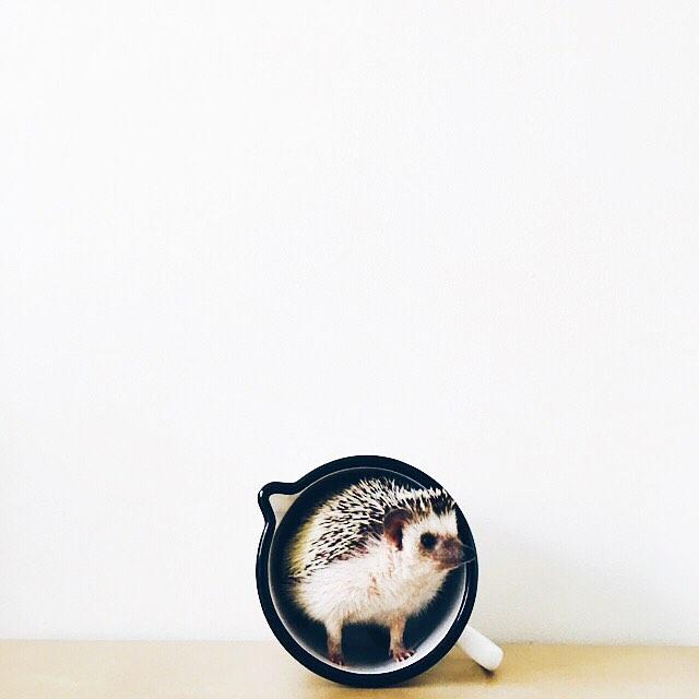 ordinary-hedgehogs-photography-hedgehographer-3