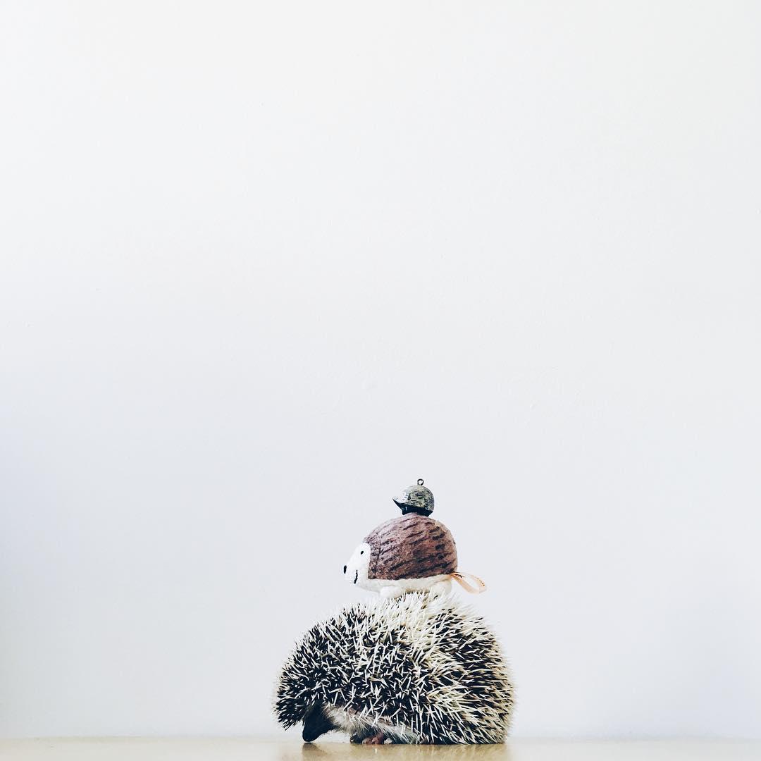 ordinary-hedgehogs-photography-hedgehographer-4