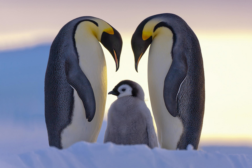 penguin-awareness-day-photography-10