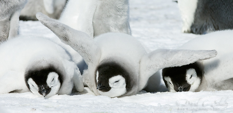 penguin-awareness-day-photography-13
