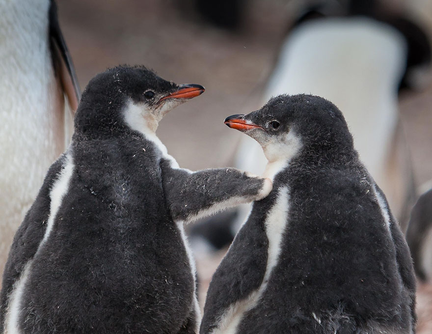 penguin-awareness-day-photography-14