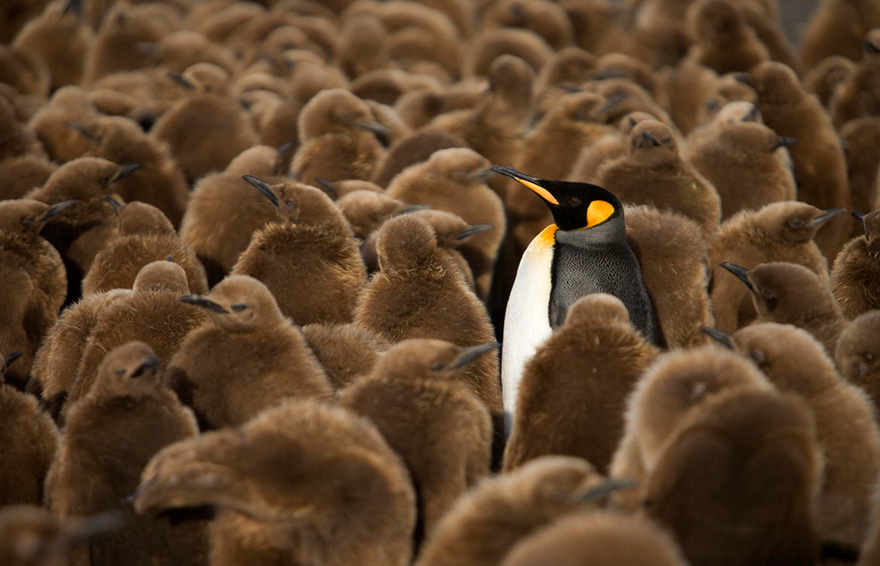 penguin-awareness-day-photography-4