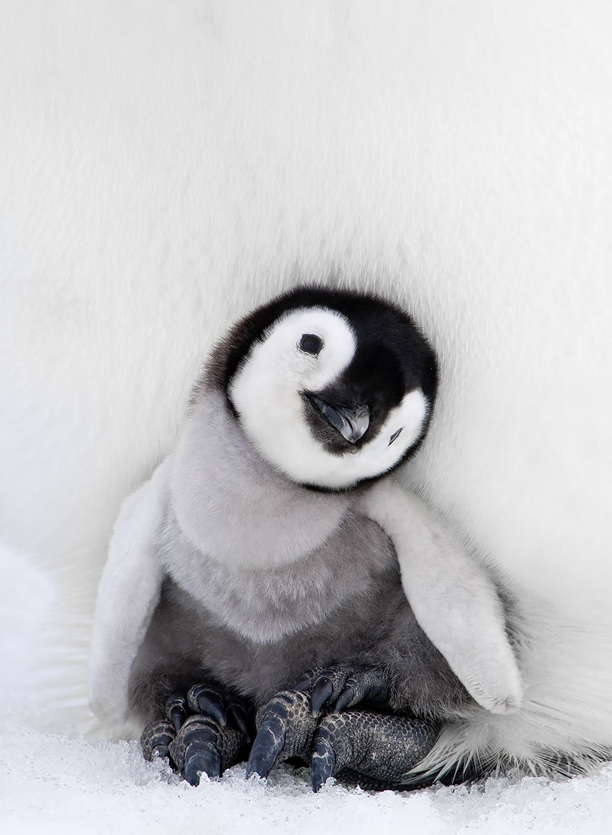 penguin-awareness-day-photography-7