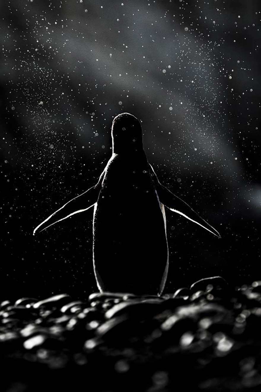 penguin-awareness-day-photography-8