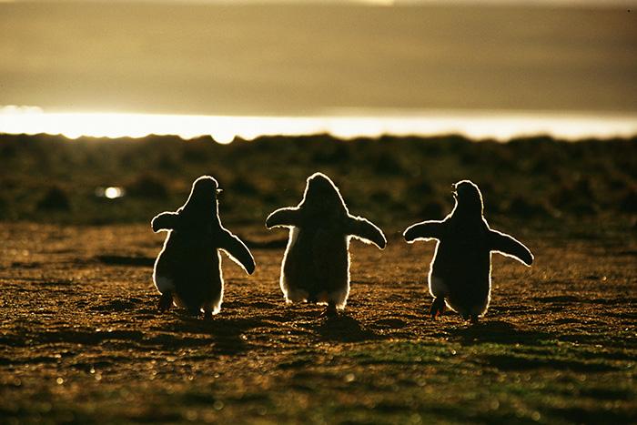 20 Beautiful Pics To Celebrate Penguin Awareness Day