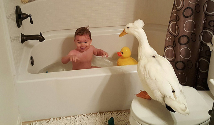 pet-duck-boy-best-friends-mr-t-and-bee-tyler-young-1